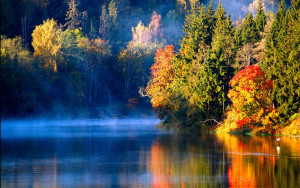 autumn-forest-840x525